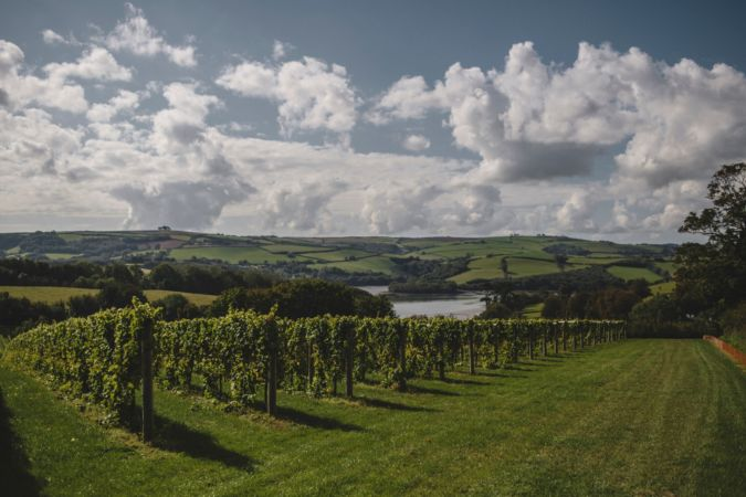 sharpham wine estate in the english riviera