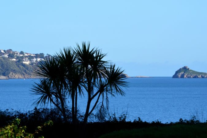 Torbay palm trees in the English Riviera