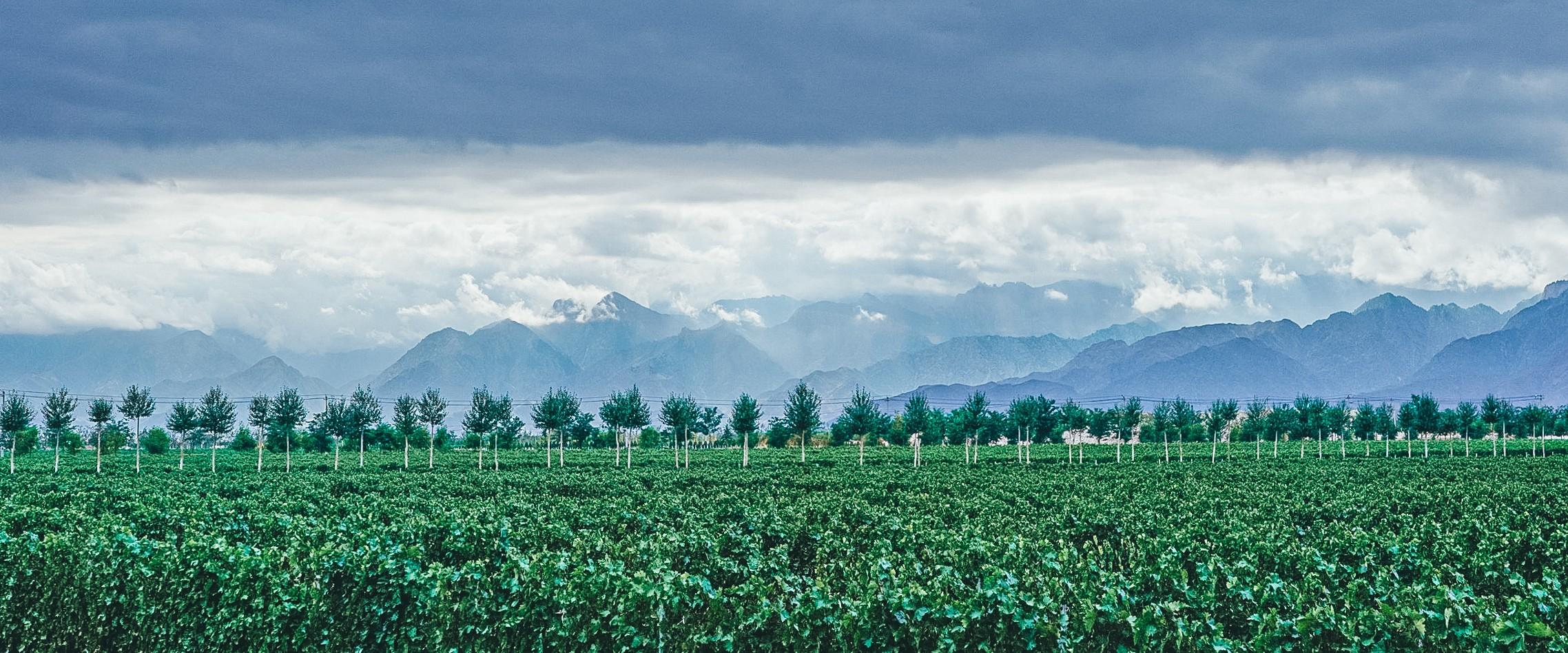 Chinese winery Jade Vineyard in Ningxia