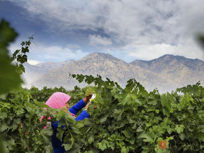 Ningxia Jade Vineyard Winery