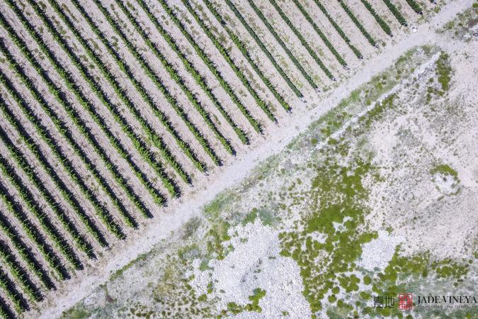 Jade Vineyard vines