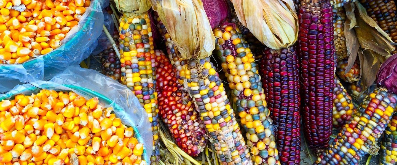 Corn-based spirits