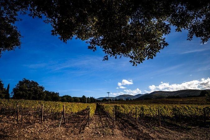 Tenuta di Biserno – Tuscany
