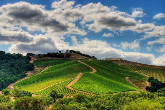 Vineyard on Daou Mountain