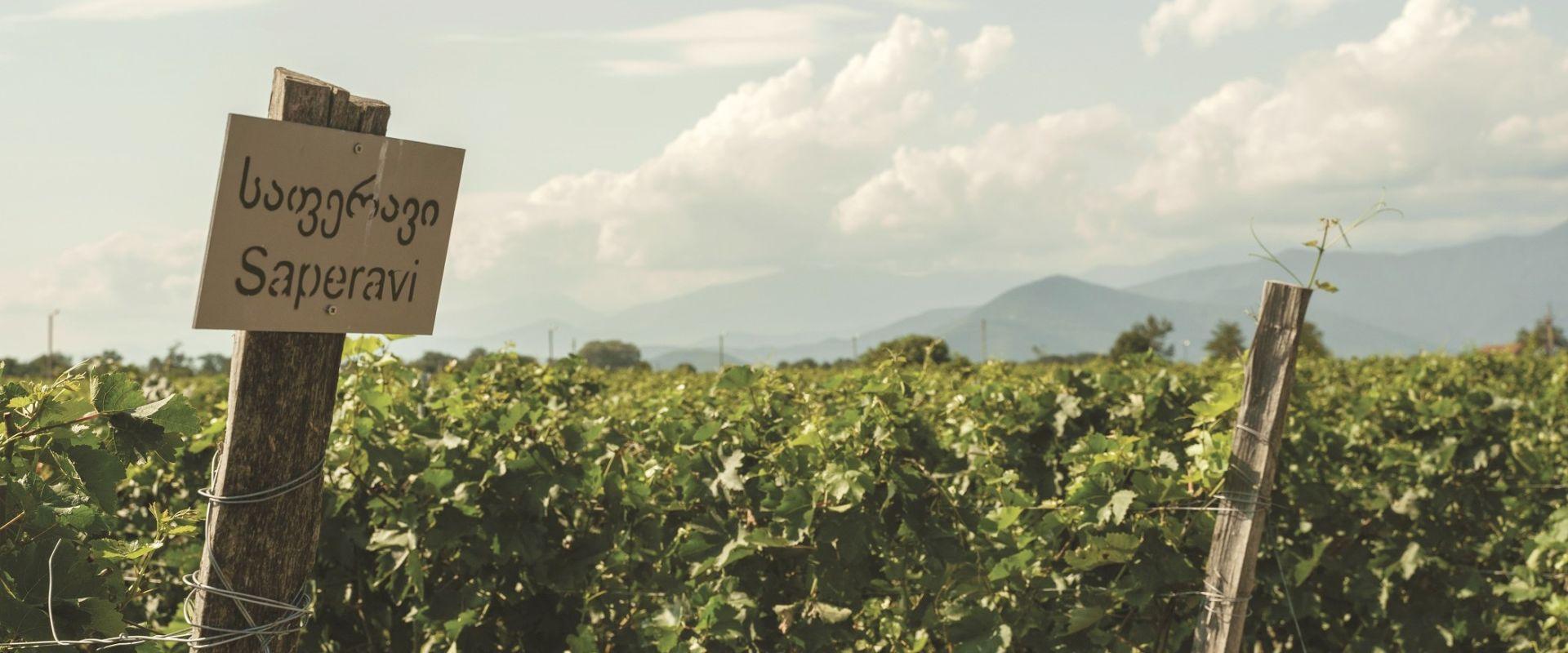 askanelli vineyards in georgia