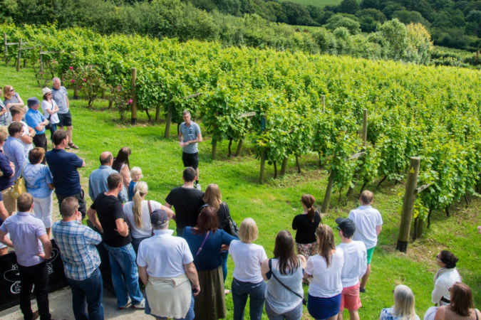Camel Valley English Vineyard