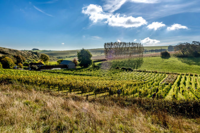 Breaky Bottom South Downs Vineyard