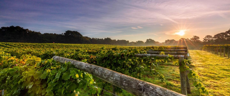 Bolney Vineyard West Sussex