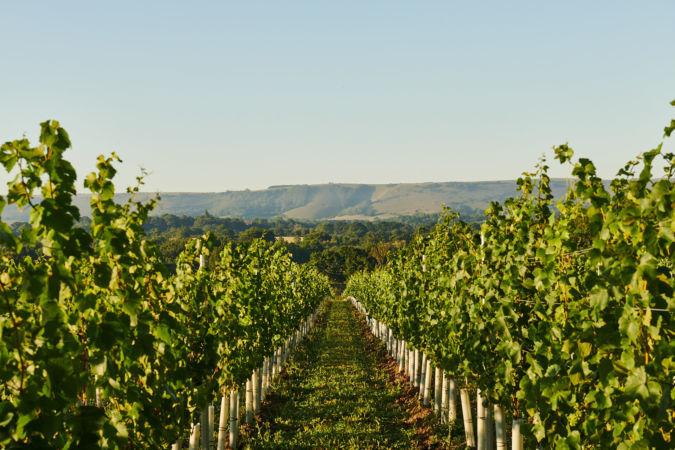 Artelium Wine Estate
