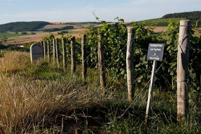 Drappier vines - Champagne