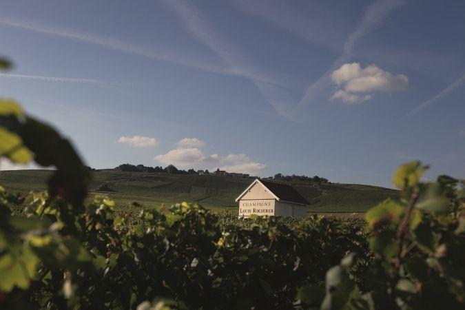 Louis Roederer vineyards - Champagne