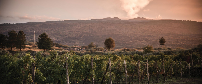 Tascante vineyard at Mount Etna volcano