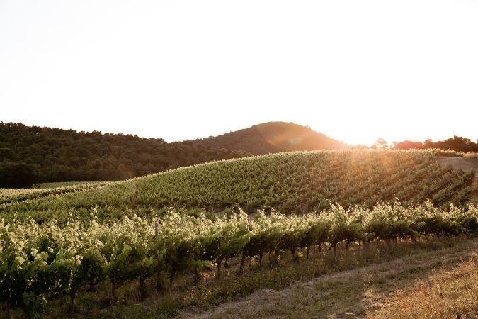 Chêne Bleu vineyard