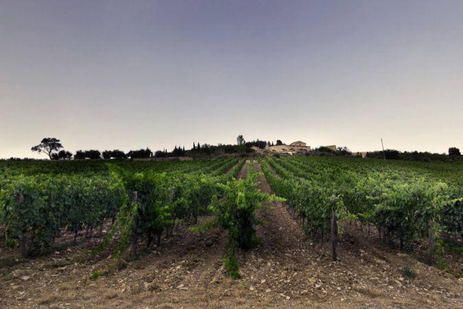 Monteraponi vineyard in Tuscany