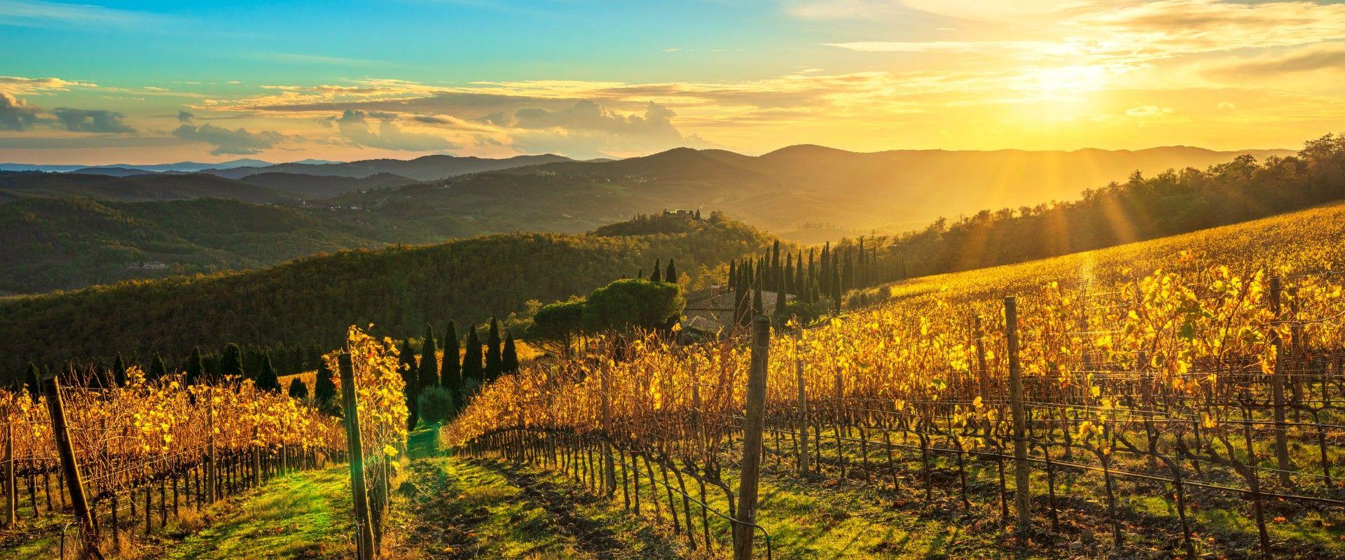 a vineyard in radda in tuscany, italy