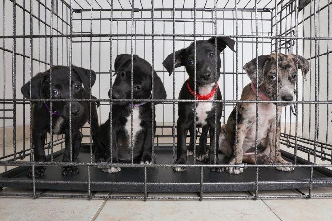 Dog rescue - Hendrick's