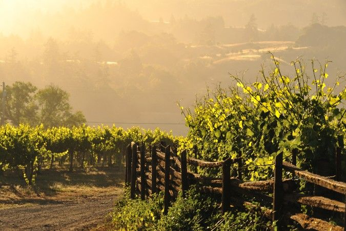 anderson valley vineyard in california