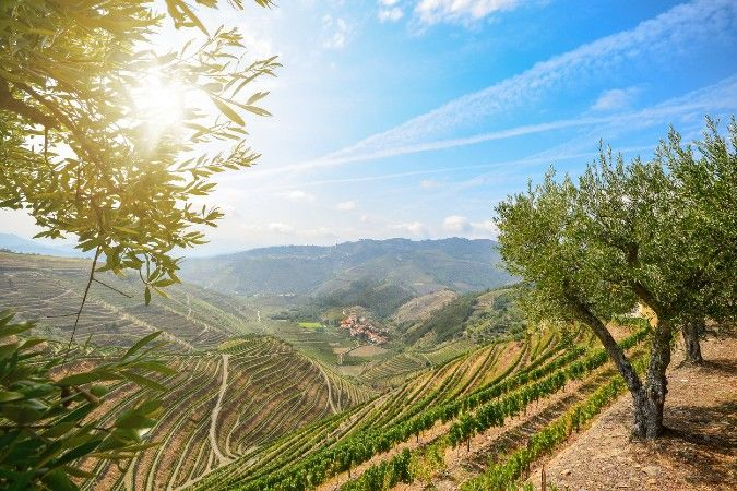Douro Valley vineyards in the sun