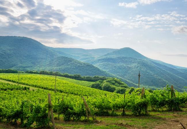 krasnodar vineyard in russia