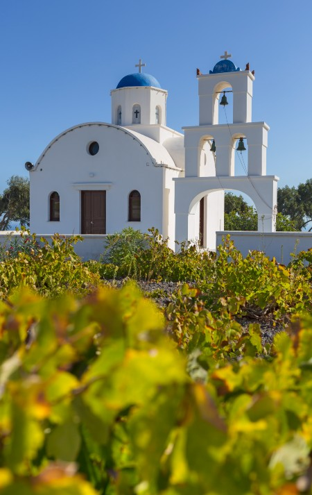 greek vineyard