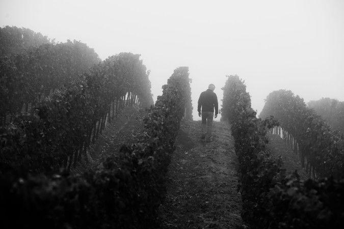 Matt Courtney walks his Ferren vineyard