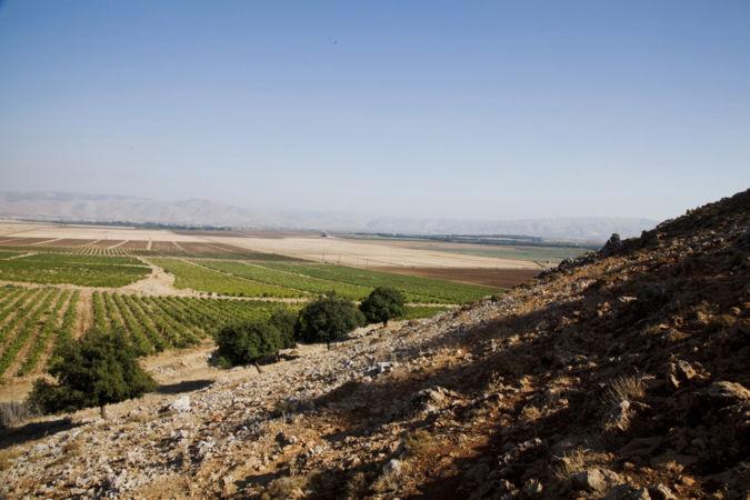 domaine des tourelles bush trained cinsault vines in lebanon
