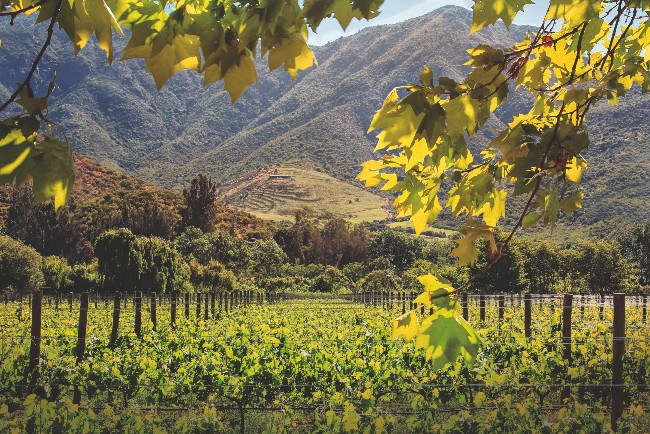 Rows of vines with a backdrop of mountains at Seña Vineyard in Chile