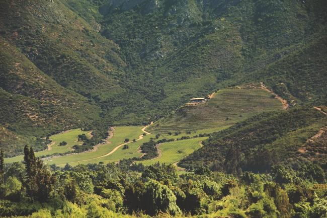 Valley floor in Seña Vineyard, Chile