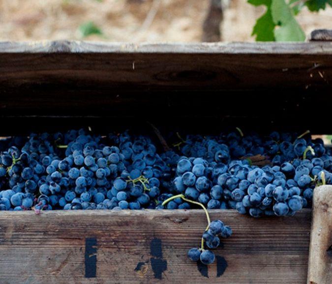 domaine des tourelles black grapes lebanon